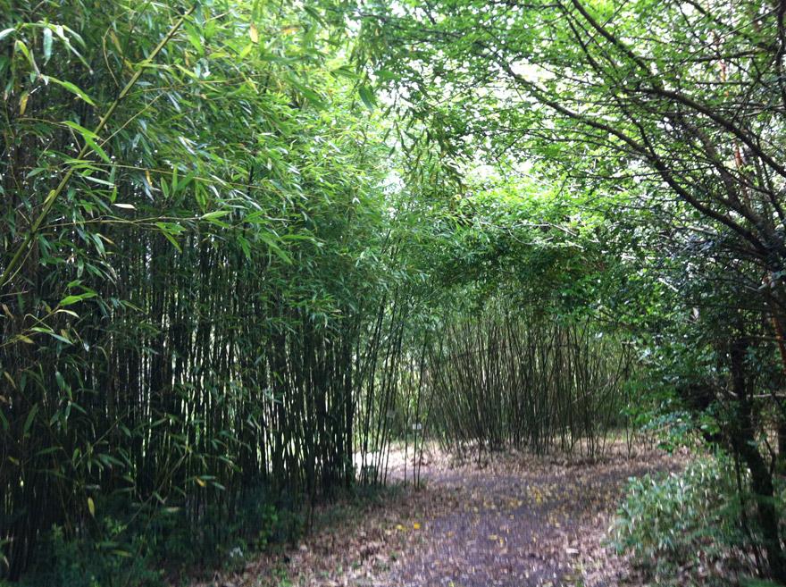 Bamboo-park-Glengariff
