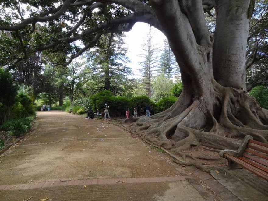 arderne-gardens,-activia-(49)