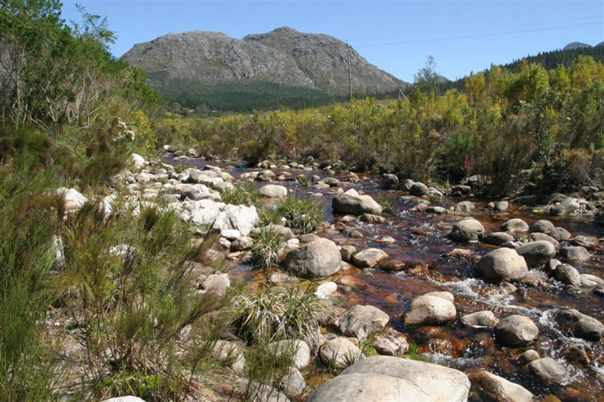 hottentots-holland-river-(8)