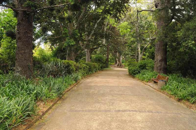 Arderne Gardens-018