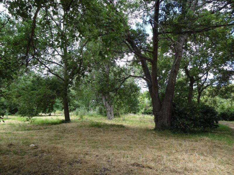 boschenheuwel arboretum fitness (3)