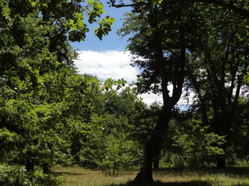 oak valley bird forests (18)