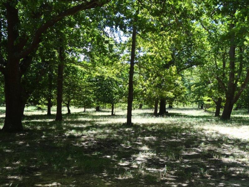 oak valley bird forests (3)