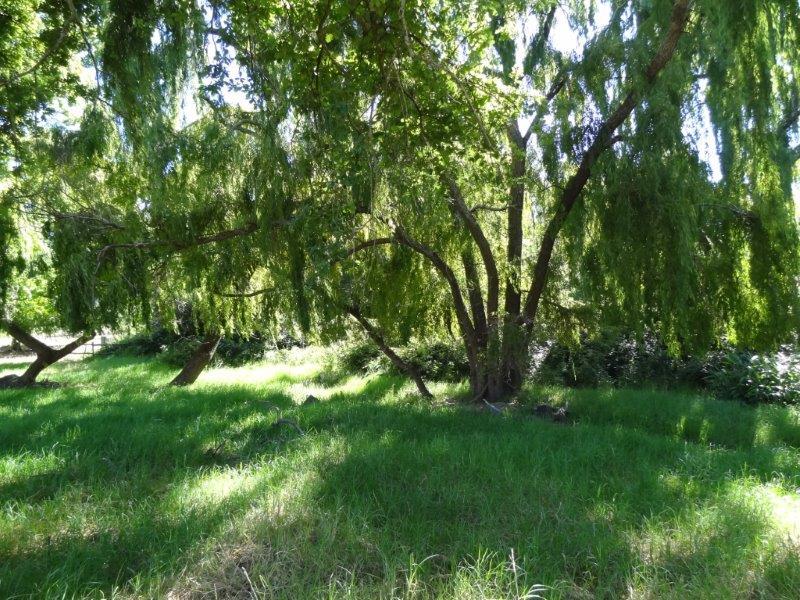 rustenberg bird forests (7)